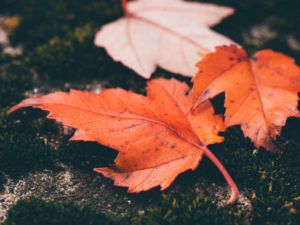 Canva – Autumn Leaves on the Floor